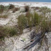 primary_dunes